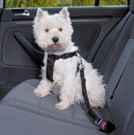Autogordels voor uw hond