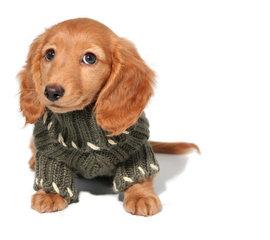 Hondenpullover