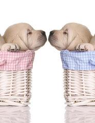 De Puppy shop