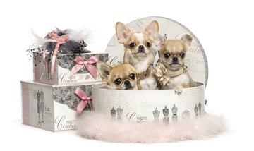 De Chihuahua Shop