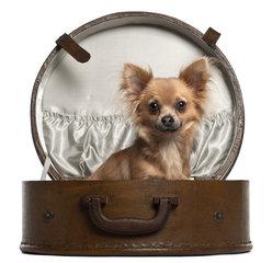 Chihuahua draagtassen