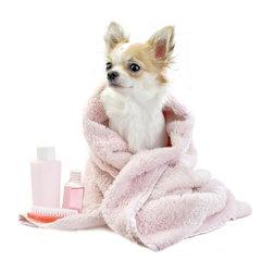 Chihuahua verzorging