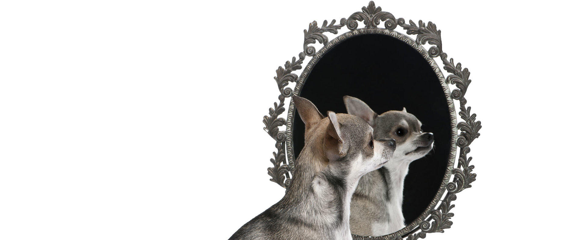 De-Chihuahua-Shop