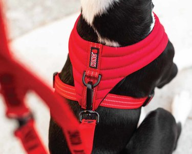KONG Comfort harness Red